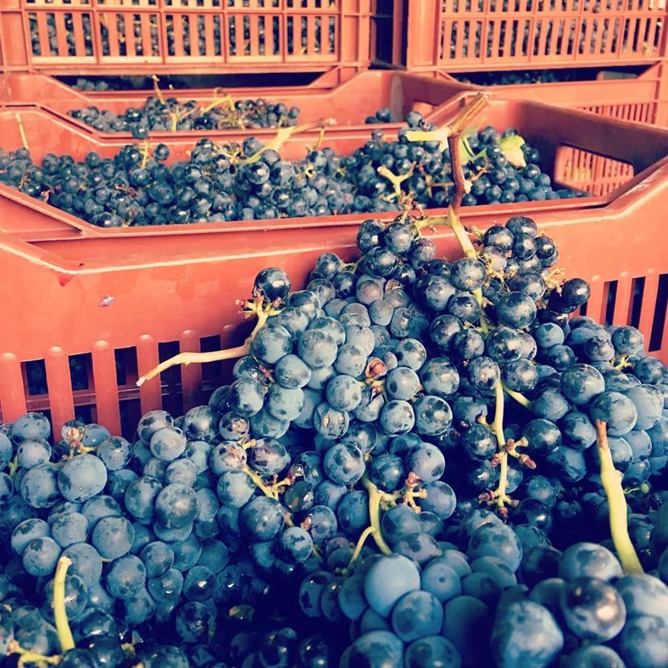 Le Manoir des Schistes at America Wines Paper