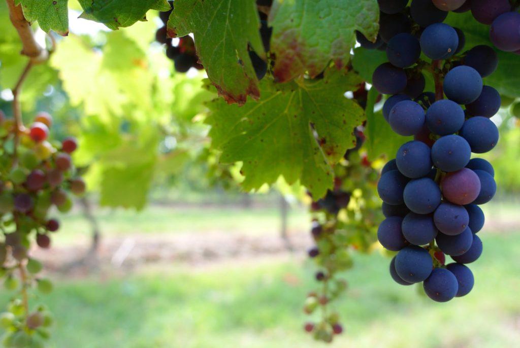 Bodega Los Cedros at America Wines Paper