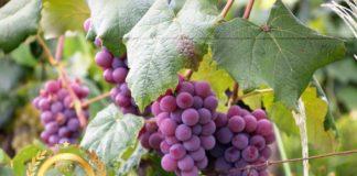 Platinum SRL at America Wines Paper